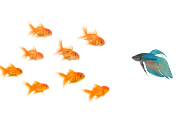 different-fish