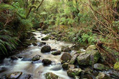 Catlins Coast New Zealand