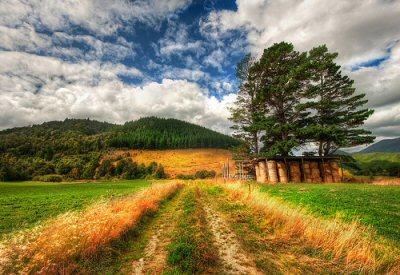Grass New Zealand