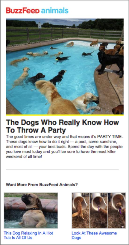BuzzFeed Email Marketing