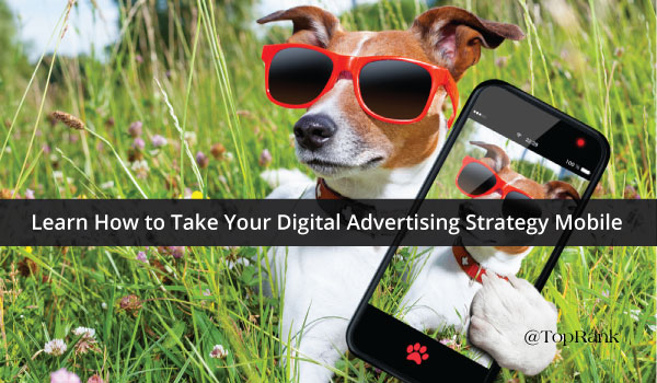 Visual Content Marketing Dog with Sunglasses and Cell Phone